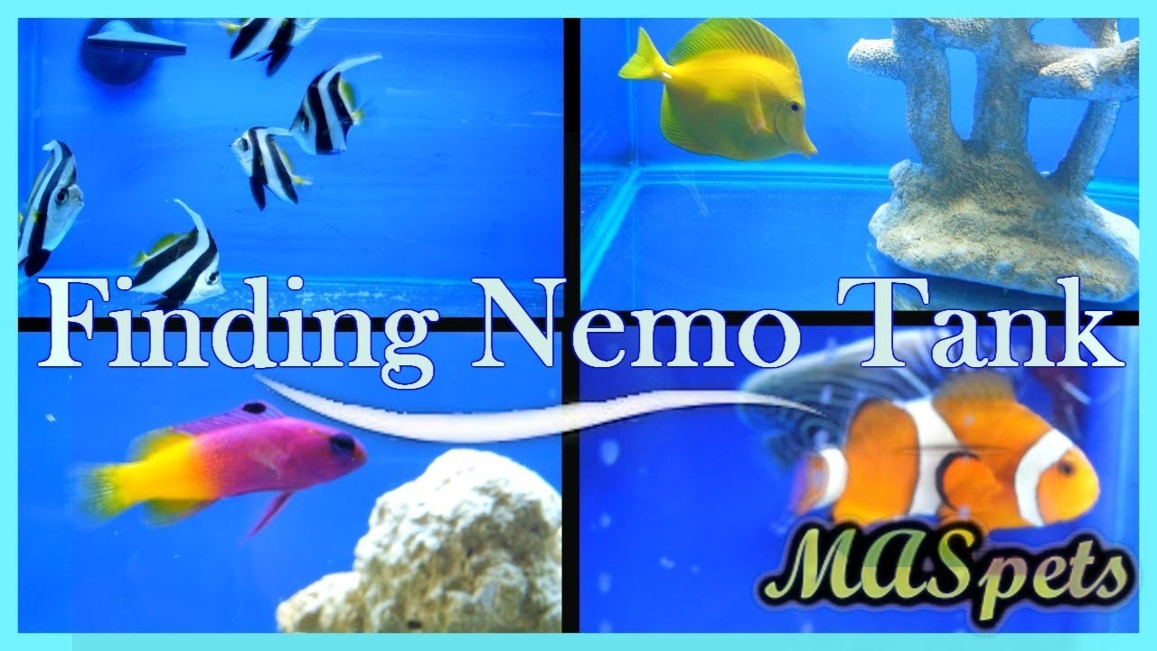 How To Build A Finding Nemo Or Finding Dory Fish Tank Pethelpful