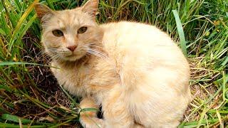 お腹を丸出しにして無防備に寝る猫と草むらでアンモニャイトになって寝る猫
