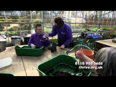 Kim Wilde's BBC Lifeline appeal on behalf of charity Thrive - BBC One