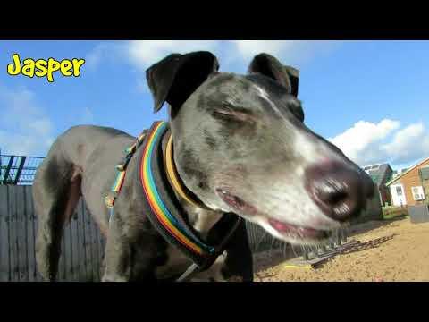Dogs Trust Leeds - Greyhounds & Lurchers