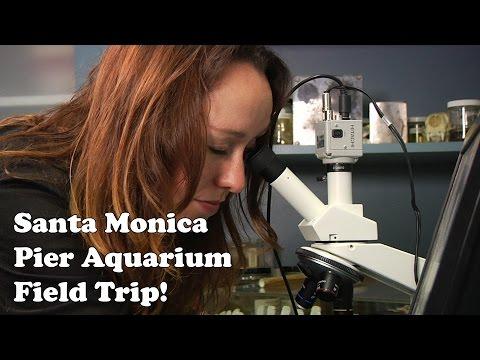 Santa Monica Pier Aquarium Field Trip!
