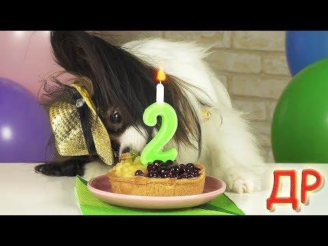 Веселый ЮКИ устроил праздник!!! День Рождения папильона