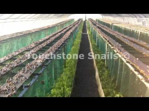 Τοuchstone Snail Technologies LTD - Curtain Method