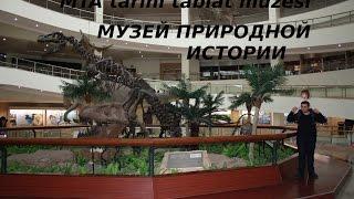 видео В Дарвиновский музей едет амурозавр!