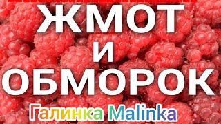 Колесниковы /Жмот и обморок /Обзор Влогов /