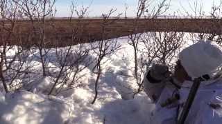 Охота на гусей на Чукотке весной весной