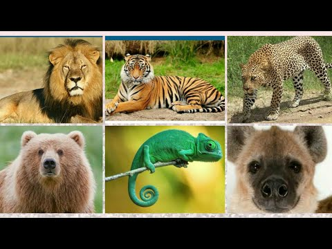 HOW TO TELL WILD ANIMALS by CAROLYN WELLS || IN HINDI ||