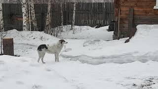 Собака в шоке, хорошая идея, смешные кадры
