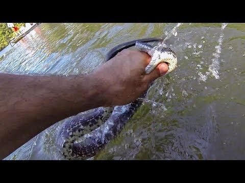 IT BIT ME!!! (Catching A BIG SNAKE While Bass Fishing) HERPING!