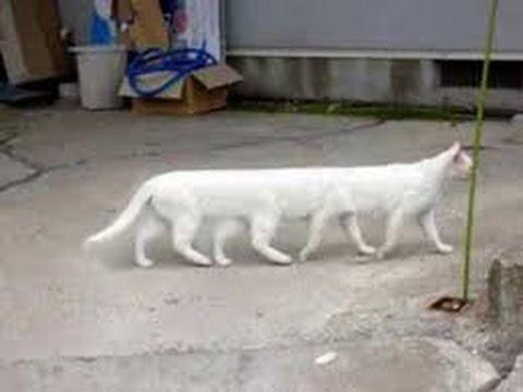 Cat attack Dog | Dog attack Cat | Funny kitten videos | Cat attack Dog compilation 2017
