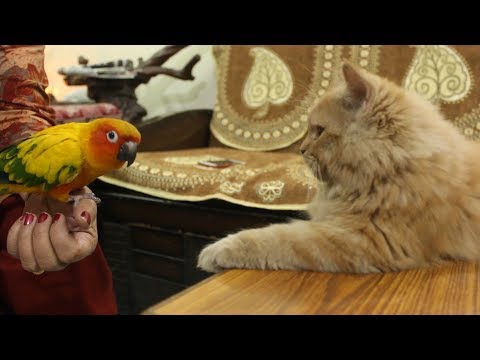 Kitten sees Bird for the first time  | Wildly Indian