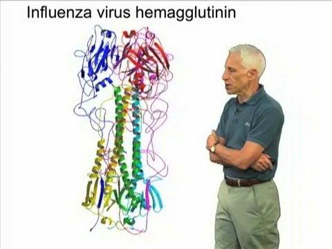 Influenza Hemagglutinin – Stephen Harrison (Harvard/HHMI)