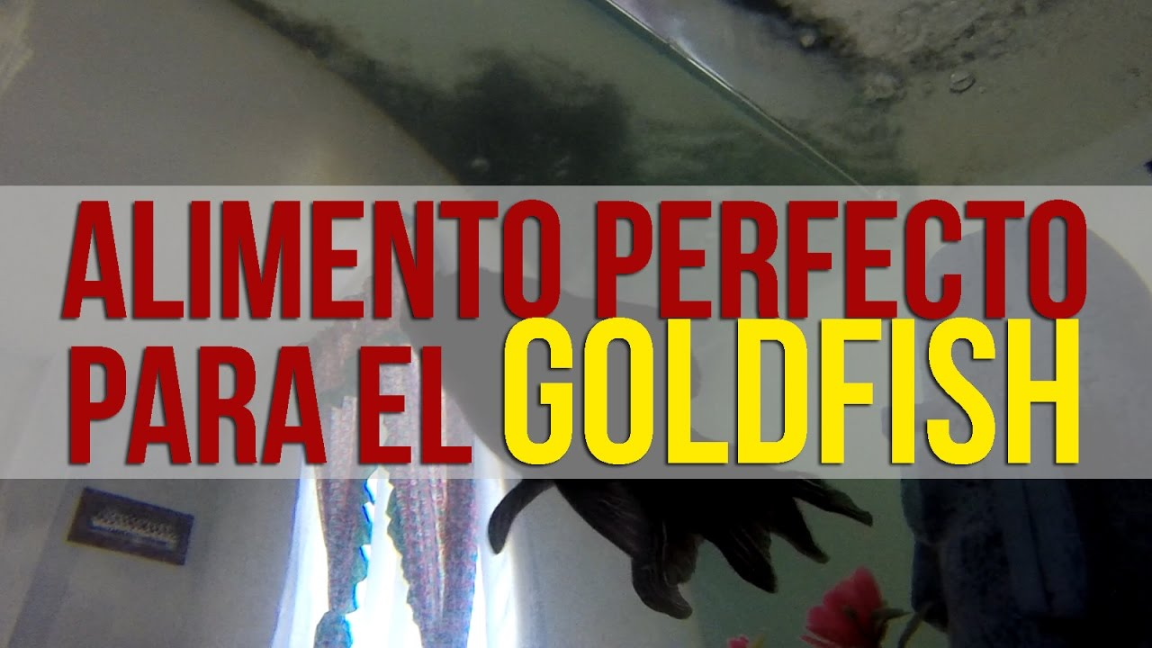 Los mejores alimentos para el pez goldfish youtube for Alimento para goldfish