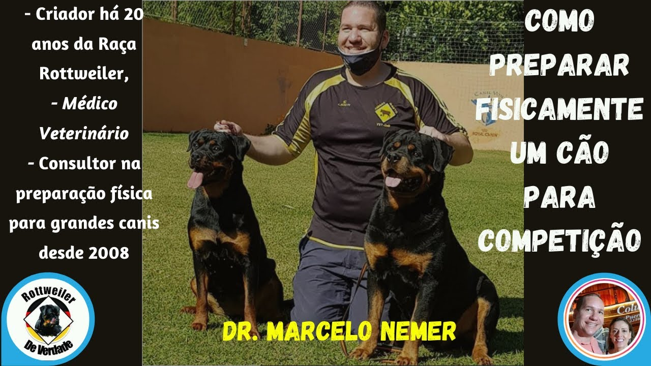 Como preparar fisicamente um cão para competição - Exercícios e suplementos!