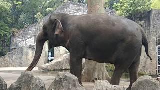 Ragunan zoo terbaru | jenis jenis satwa yang ada di Ragunan Jakarta Selatan Indonesia