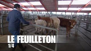 Dans les coulisses du marché aux bestiaux de Sancoins : les préparatifs