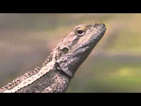 "Part 2 Texas Comptroller Susan Combs talks about ""the lizard"""