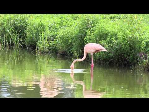 Hialeah's Famous Flamingos