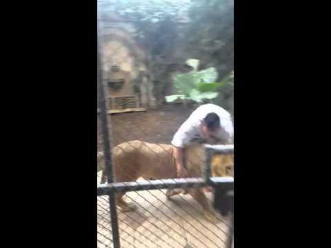 האברך החרדי שנכנס לגוב האריות