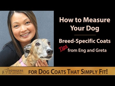 How To Measure Your Dog For A Breed-Specific Dog Coat