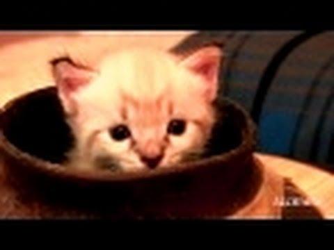 jungle book cat