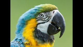 parrot training.how to teach a parrot to talk.how to teach a bird to talk.teaching parrots to talk