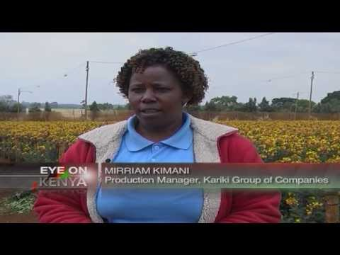Obtaining high farm yields a perennial challenge to Africa's farmers