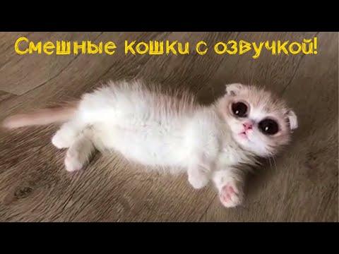 Смешные кошки коты озвучкой за 1 августа