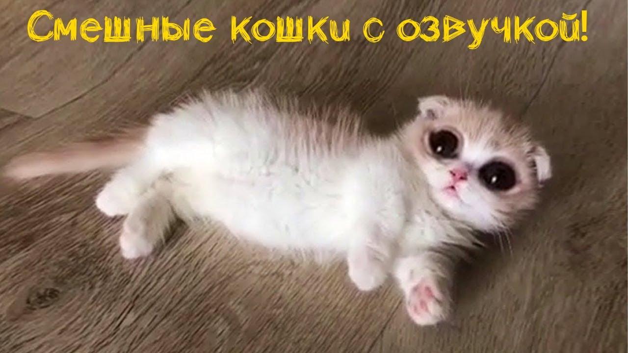 Смешные кошки и коты с озвучкой - ЛЮТЫЕ ПРИКОЛЫ, лучшее за 2020 год