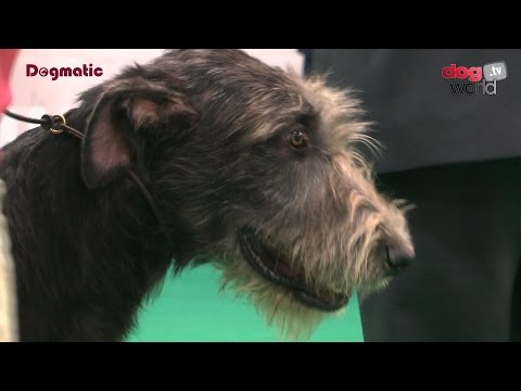 Houndshow 2016 - Best Puppy in Show