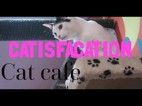 Catisfaction (cat Cafe)