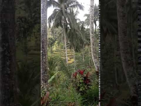 Russian Centre Bali  at tegalalang rice field