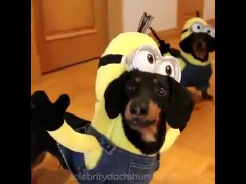 Funny Dog Video Clip Funny Cute Dog Very Funny Dog New Video