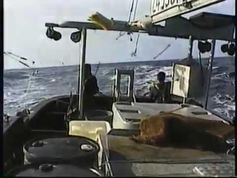 Tuna Fishing 200 Miles Off Vancouver Island British Columbia