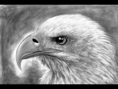Dibujo de un águila a lápiz | Drawing of an eagle in pencil HD