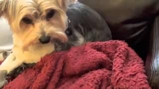 Training A Possession Aggressive Dog