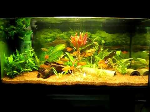 Zierfische 54 l aquarium neu eingerichtet for Zierfische aquarium