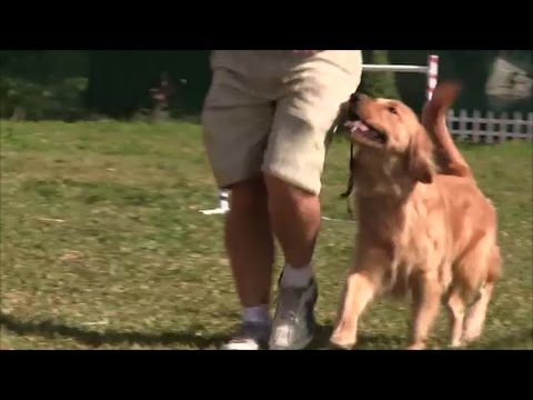 Dances with dogs!  The Ultimate Dog Training Method for Pet Dogs!