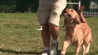 The Greatest Dog Training Show on Earth!  The Ultimate Dog Training Method for Pet Dogs!