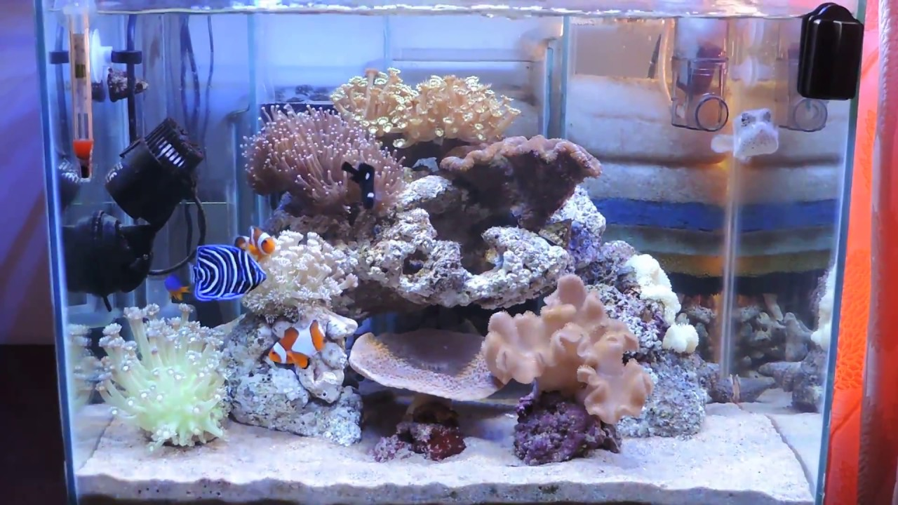 Aquarium Air Laut Sederhana Tambah Ikan Dan Coral Baru Youtube Aquarium air laut sederhana