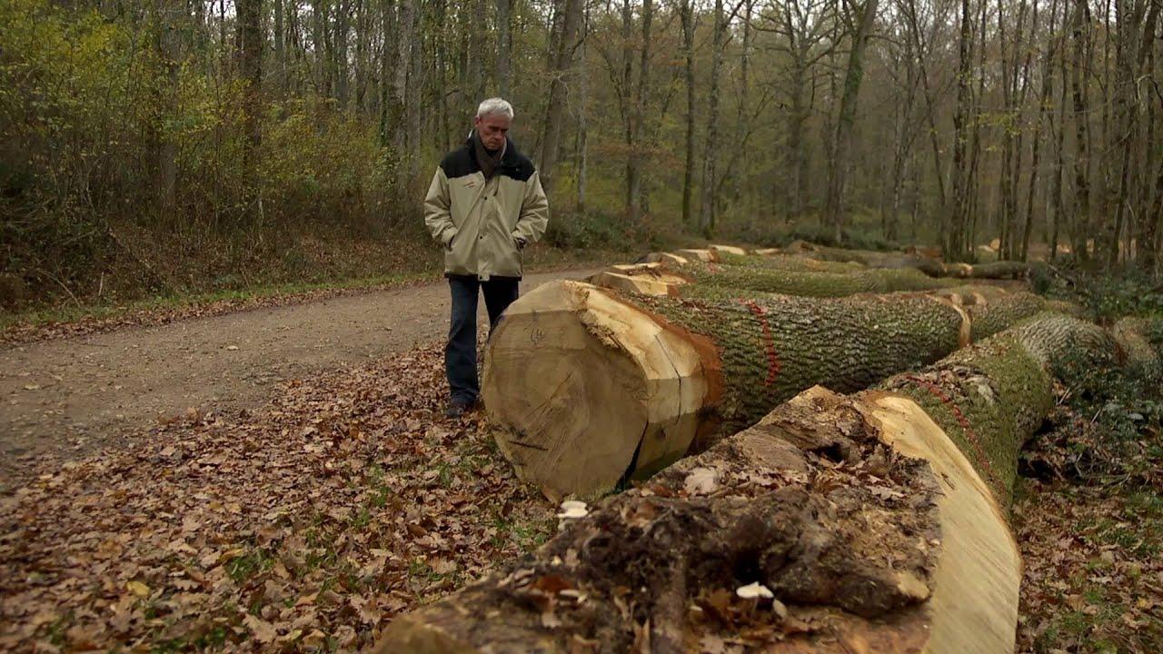 Comment vendre des arbres sur pied youtube - Arbre fruitier comme bois de chauffage ...