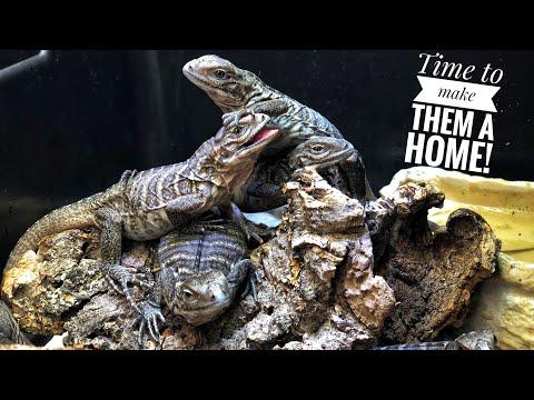 Setting up my Baby Lizard Nursery
