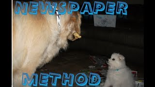 House Training Your Puppy- Newspaper Method