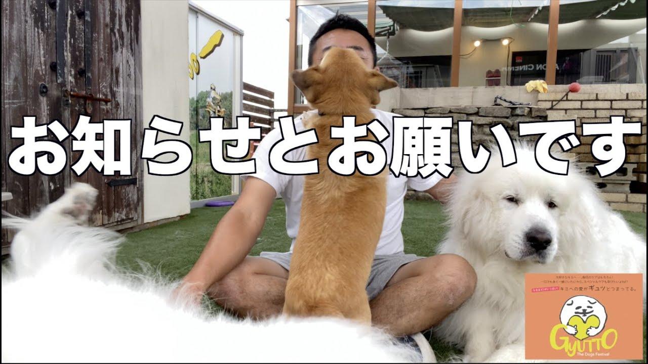 Gyutto大阪舞洲のお知らせ