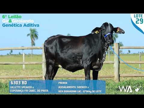 LOTE 29 - 6303 BD - 6º Leilão Gir & Girolando Genética Aditiva