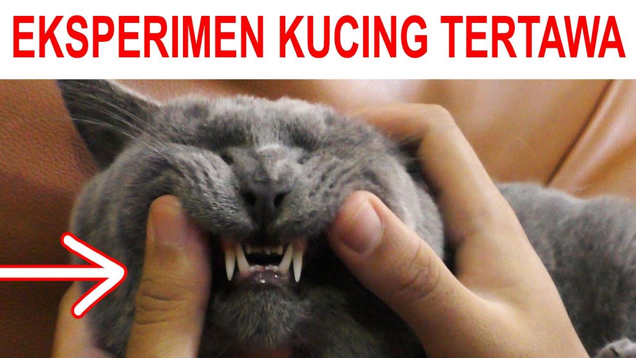 EKSPERIMEN KUCING TERTAWA