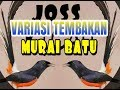 Variasi Tembakan Murai Batu  Mp3 - Mp4 Download