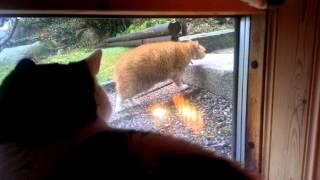 信じられないほどゆっくり歩く猫…まるでスローモーション再生(動画)