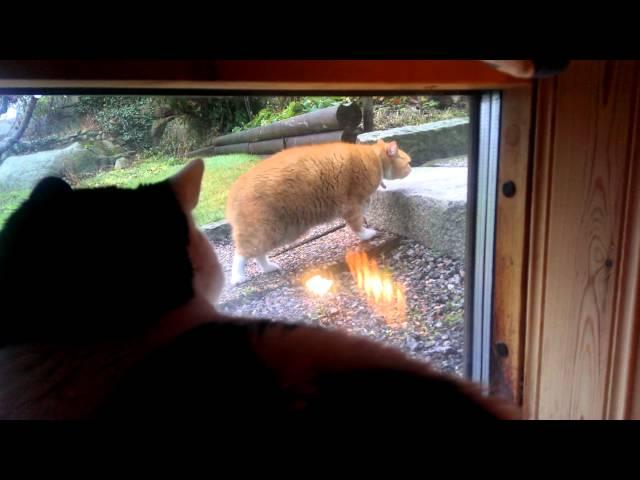Slowmotion cat walks away