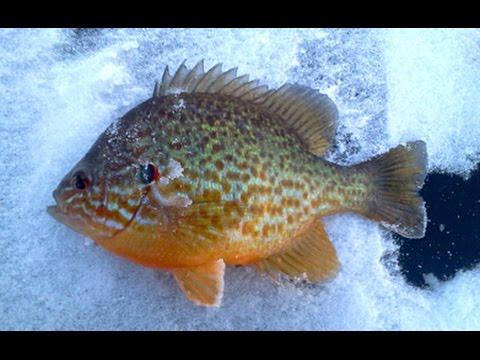 Odd Times While Ice Fishing Lake Champlain
